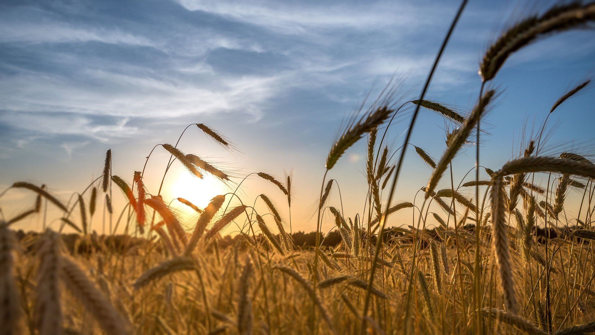 The market for organic grains such as corn, soybeans, and wheat can be volatile from year to year or even over a growing season based on constant changes...