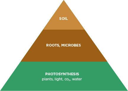 Organics Triangle